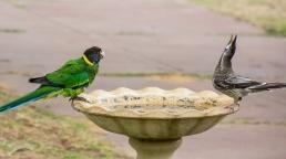 Birdbath Antics - Face to Face Communication!