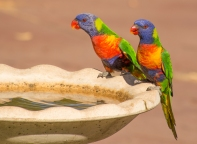 Birdbath Antics