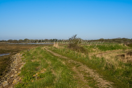 Northern Sea Wall - Pagham (1)