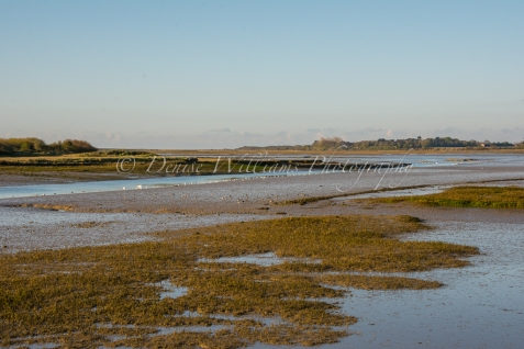 Northern Sea Wall - Pagham (4)