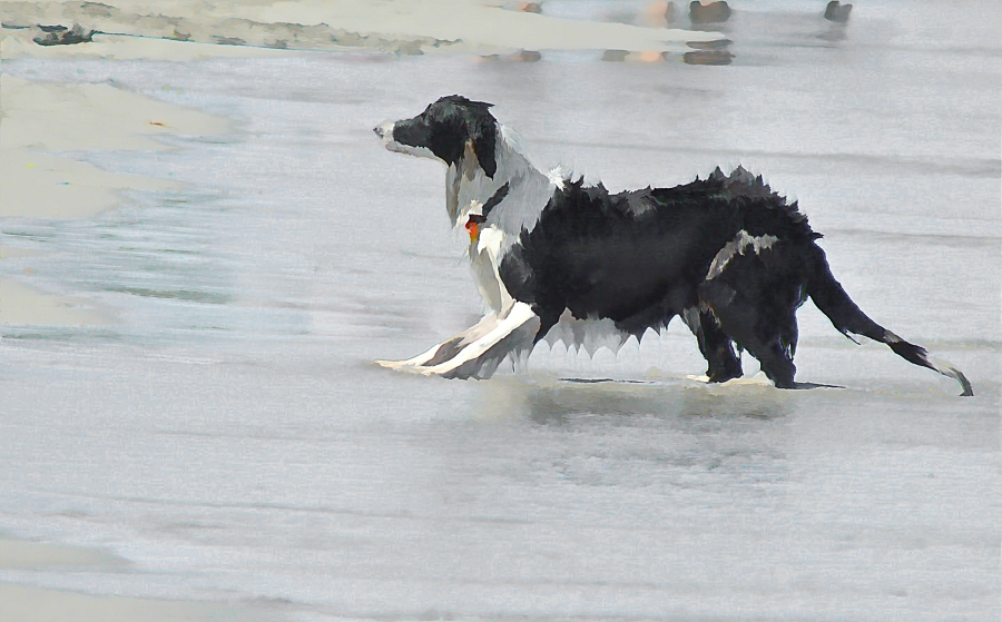 south-beach-canines-anticipation