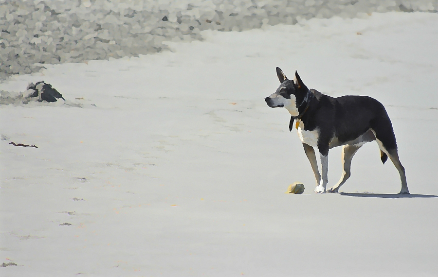 south-beach-canines-concentration