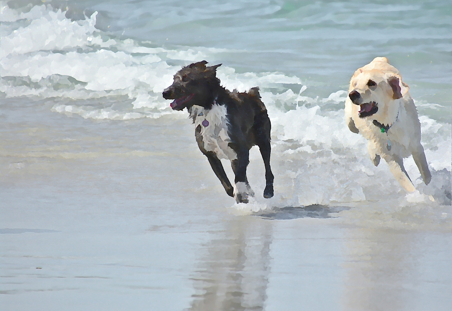 south-beach-canines-duet