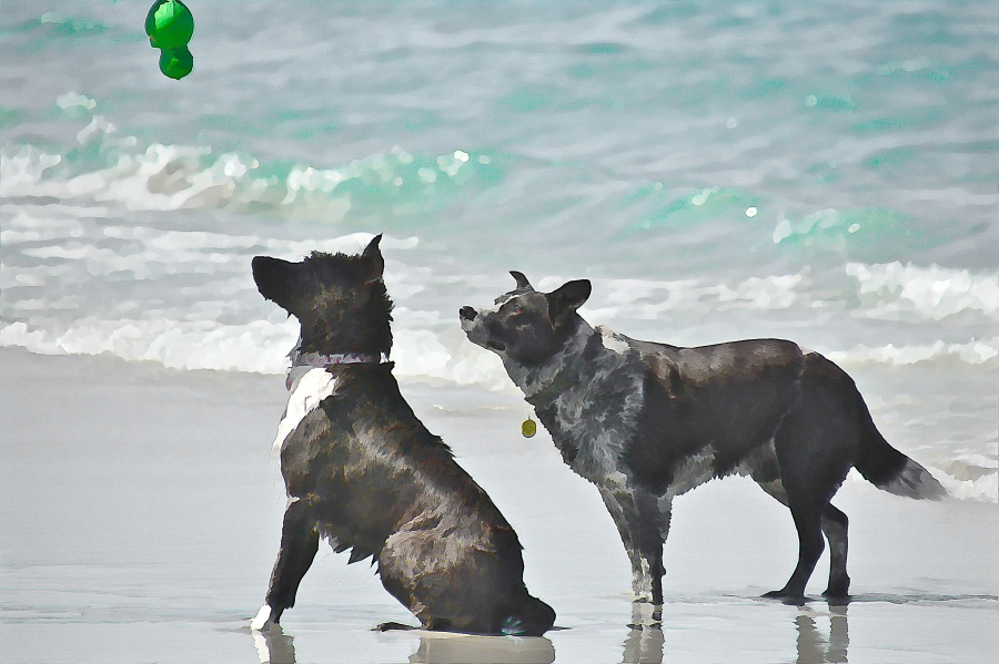 south-beach-canines-expectation