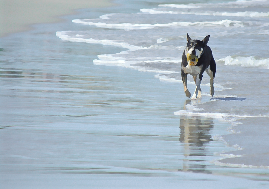 south-beach-canines-fetch