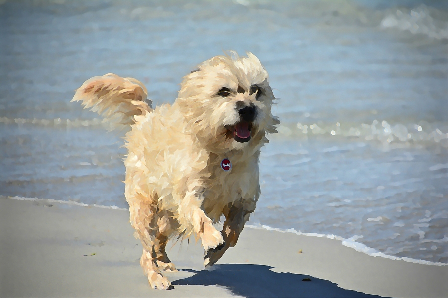 south-beach-canines-happiness