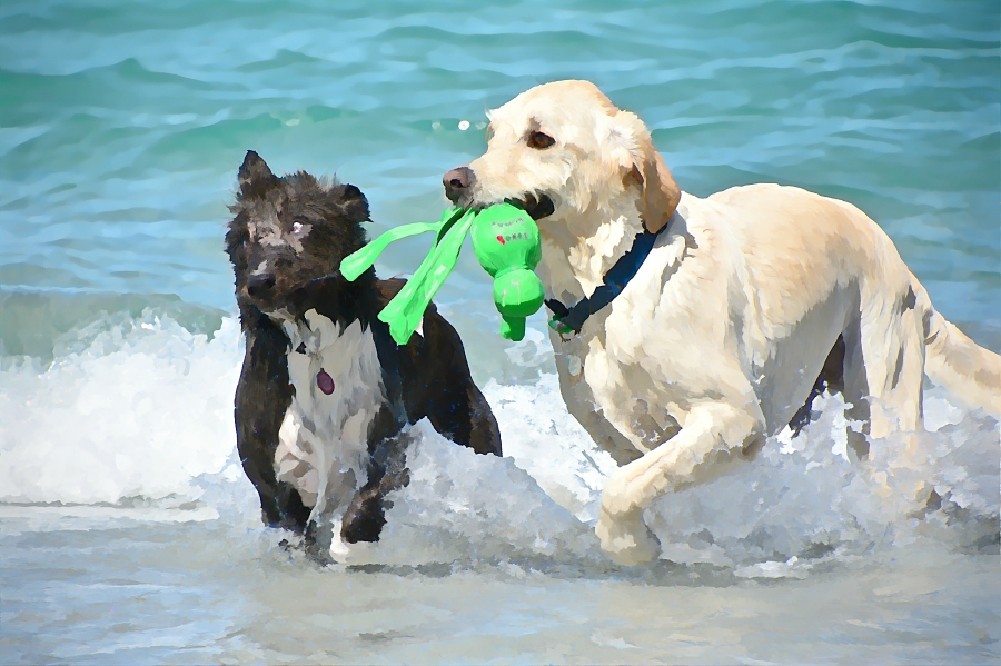south-beach-canines-possession