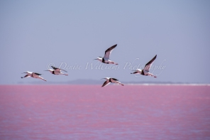 Hutt Lagoon nr Port Gregory, Western Australia