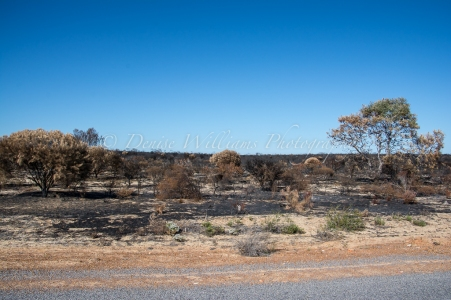Burnt bush the other side of the road - Kalbarri National Park