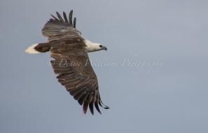 Mangrove Bay, nr Exmouth, Western Australia