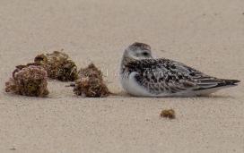 Sandy Bay nr Exmouth, Western Australia
