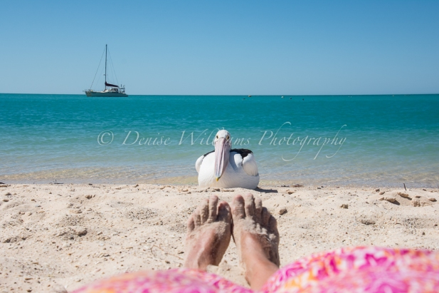 Monkey Mia, Shark Bay - Western Australia