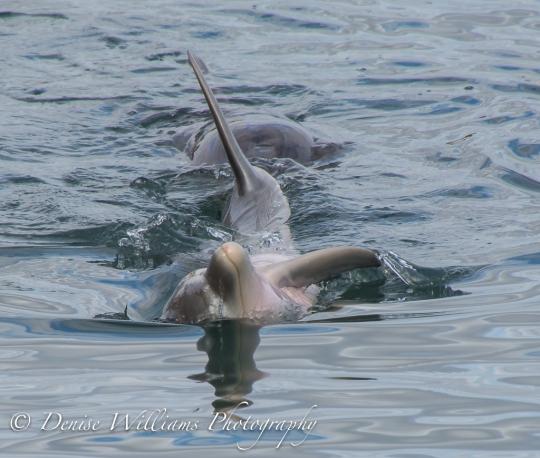 Dolphins @ Monkey Mia