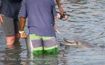 Dolphins @ Monkey Mia 2