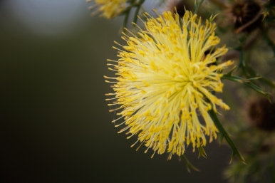 Canning River Flora 2