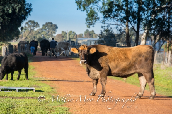 Greener Pastures Sanctuary, Waroona - June 2018
