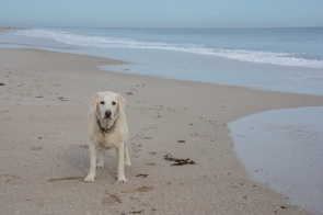 Millie at Peppermint Grove Beach