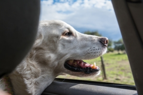 Happiness is an open car window!
