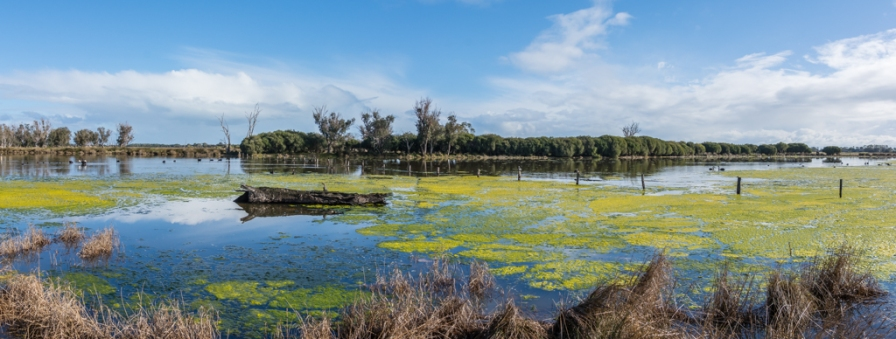 View from Malup Bird Hide, Nr Busselton