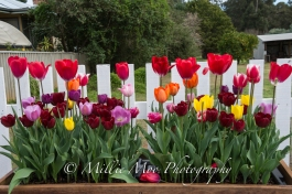 Nannup in Bloom