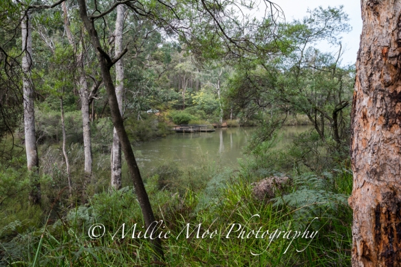 Barrubup Pool nr Nannup