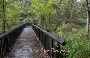Barrabup Pool nr Nannup