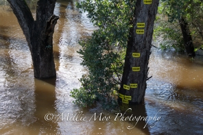 Blackwood River, Nannup